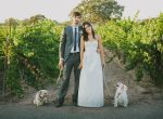firestonewinery_rebeccapellman_iangrant_coupledogs