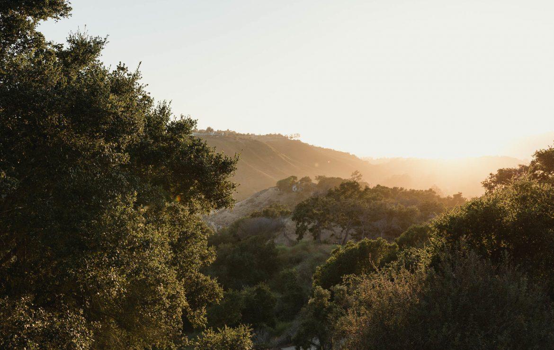 Godric Grove View