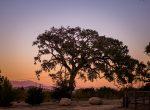 privatesyranch_willakveta_treebackdrop