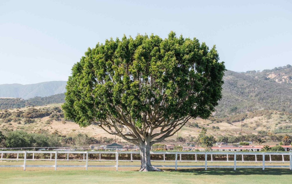 Tree Backdrop for Ceremony