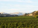 koehler winery